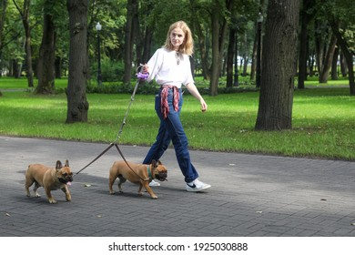 MINSK, BELARUS - 9 AUGUST, 2020: dog sitter walks in the park with french bulldogs