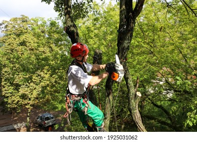 MINSK, BELARUS - 9 AUGUST, 2020: an arborist cuts a tree with a chainsaw in a residential area
