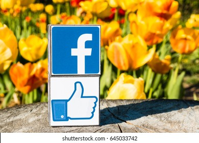 "Minsk, Belarus - May, 2017: Facebook logo and ""Like"" printed on cubes. They are on the old wooden table. Tulips background."