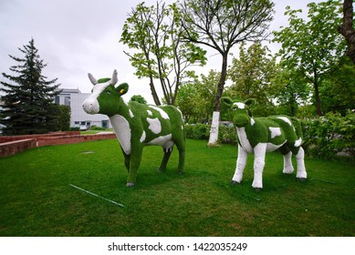 Minsk, Belarus - May 2019. Cow topiary - Figure of cow in the meadow near the Dairy Plant №1. Home art lawn mower. Concept of garden decor. Green lawn and  figure of cattle on it