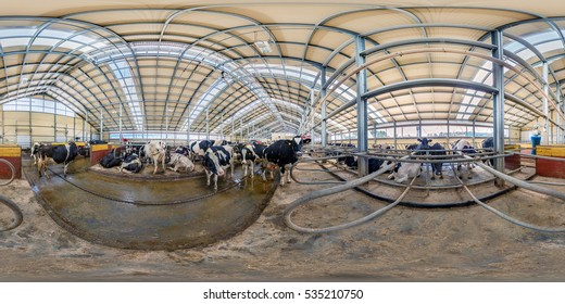 MINSK DISTRICT, BELARUS - MAY 5, 2014: Inside of the interior of the cowshed with the cows. Full 360 degree panorama in equirectangular spherical projection