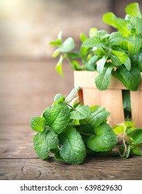 Mint. Bunch of Fresh green organic mint leaf on wooden table closeup. Peppermint in small basket on natural wooden background. Selective focus