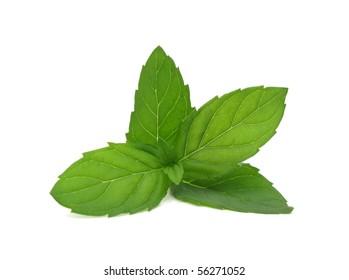 mint fresh leaves