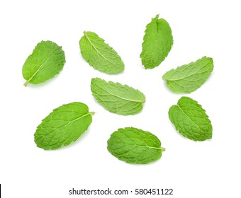 Mint green leaves isolated on white background.