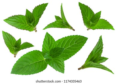 Mint herb leaf set closeup isolated on white background