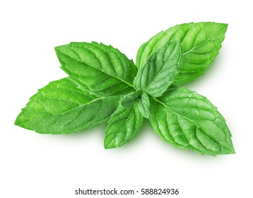 Mint isolated on white background with clipping path