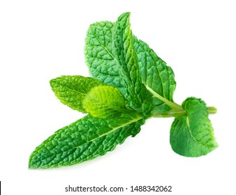 Mint Isolated. Peppermint leaf on a white   background.  Macro