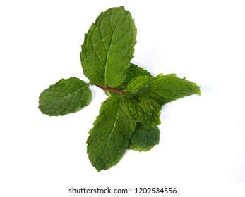 Mint laeves  on white background