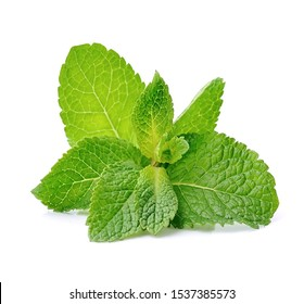 Mint leaf closeup isolated on a white background.