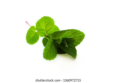 Mint leaf freshon white background isolated color