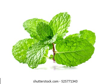 Mint leaf green plants isolated on white background, peppermint aromatic properties of strong teeth and fresh ivy as a ground cover plant types