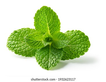 Mint leaf isolated. Fresh mint on white background. Mint leaf. Full depth of field.