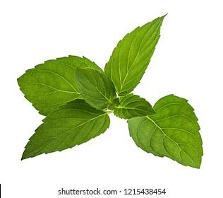 Mint leaf isolated on white background