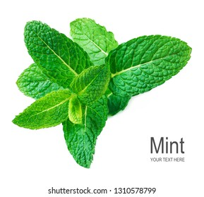 Mint leaf isolated on white background. Fresh Spearmint, menthol  leaves