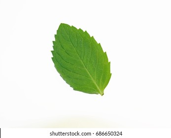 Mint Leaf Isolated On White Background