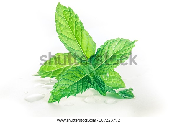 Mint leafs on a white background