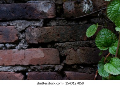 mint leaves and brick walls