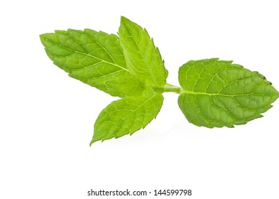 Mint leaves close up on the white
