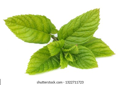 Mint leaves in closeup on white background