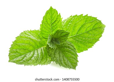 Mint leaves in closeup on white