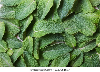 Mint leaves flat lay. Green aromatic herb
