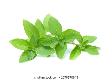 mint leaves isolated isolated on white