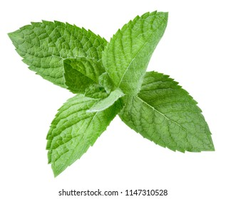mint leaves isolated on white Clipping Path