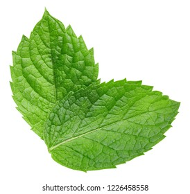 Mint leaves isolated on white. Mint Clipping Path