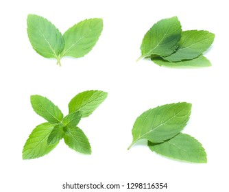 mint leaves isolated isolated on white (set  mix   collection)
