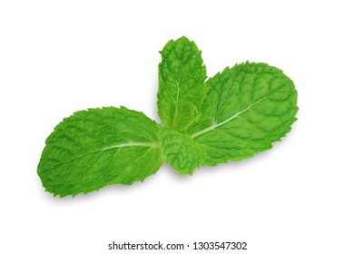 Mint leaves isolated on white background . This has clipping path.