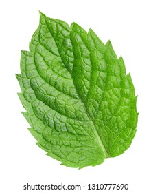 Mint leaves isolated on white. Fresh mint Clipping Path. Professional studio macro shooting
