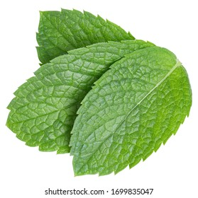 Mint leaves isolated on white. Three spearmint leaves clipping path. Mint macro studio photo