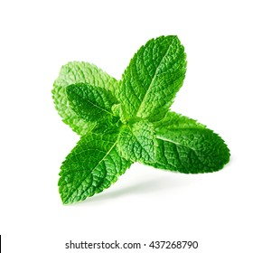 Mint leaves isolated on white background