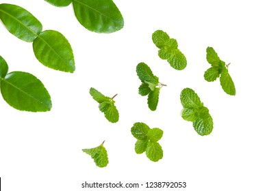 Mint leaves and lime leaves on white background