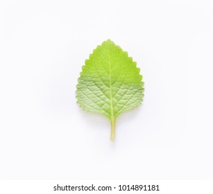 Mint leaves on white
