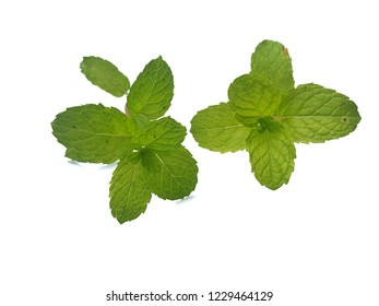 Mint leaves are placed on the white background.