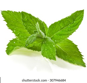 mint leaves with water drops isolated on white background