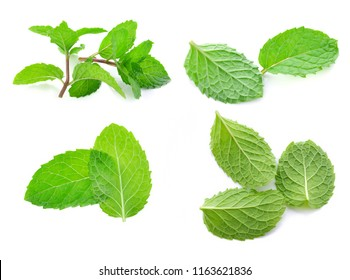 Mint set isolated on white background