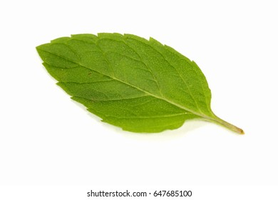 mint in white background