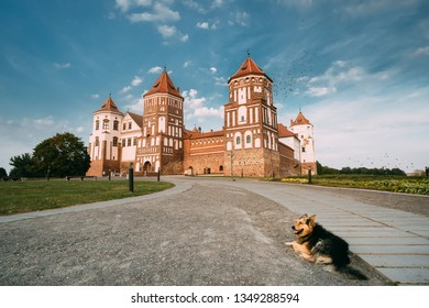 Mir, Belarus. Dog Resting Near Mir Castle Complex On Background. Architectural Ensemble Of Feudalism, Cultural Monument, UNESCO Heritage. Famous Landmark In Summer