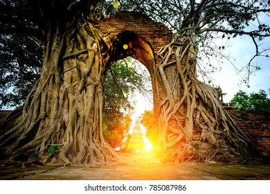 The Miracle  of Gate way to the passage of time  with arch is surrounded by bodhi Tree in Wat Phra Ngam ( Old buddhist temple ) Ayutthaya ,Thailand.