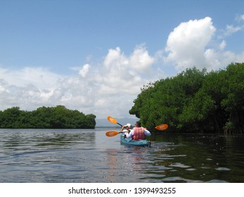 Miranda/Venezuela - April 23, 2018: Kayaking team exploring a mangrove forest and barrier or reef in Tacarigua swamp lagoon protected area with the status of national park.