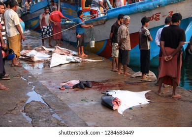 Mirissa, Sri Lanka - April 19th 2011: Early morning in the port of Mirissa - Fishermen are off-loading their trawlers with the catch of the day - Skipjack Tuna and Manta Rays