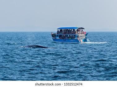 Mirissa, Sri Lanka - February 12, 2016: Sri Lanka Tourists boats Group of tourists on whale watching tour in Mirissa, Sri Lanka.