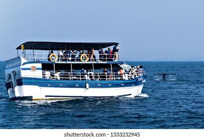 Mirissa, Sri Lanka - February 12, 2016: Sri Lanka Tourists boats in the Mirissa harbor, Boat Tours Group of tourists attraction Mirissa Whale Watching Vessel of the island.