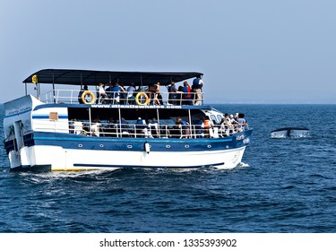 Mirissa, Sri Lanka - February 12, 2016: Sri Lanka Tourists boats in the Mirissa harbor, Boat Tours tourist attraction Mirissa Whale Watching Vessel adventure travel of the island.