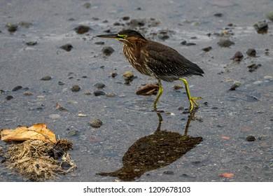 The miror of the bird