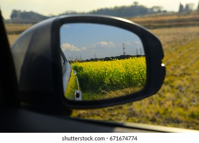 Mirror with canola flower