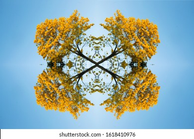 A mirror image is a reflected duplication of an object that appears almost identical, but is reversed in the direction perpendicular to the mirror surface.