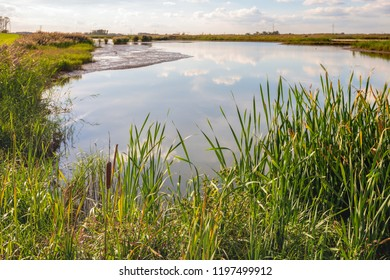 The mirror smooth water surface of a wide creek in the Dutch National Park De Biesbosch perfectly reflects the blue sky and the white clouds. In the foreground reed plants with a brown flower spike.